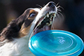2016 - Dogfrisbee Worldcup
